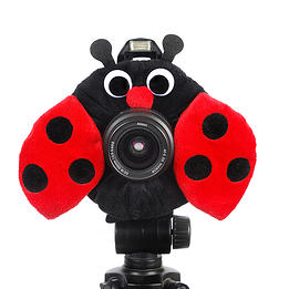 Camera Creatures Look-At-Me Ladybug